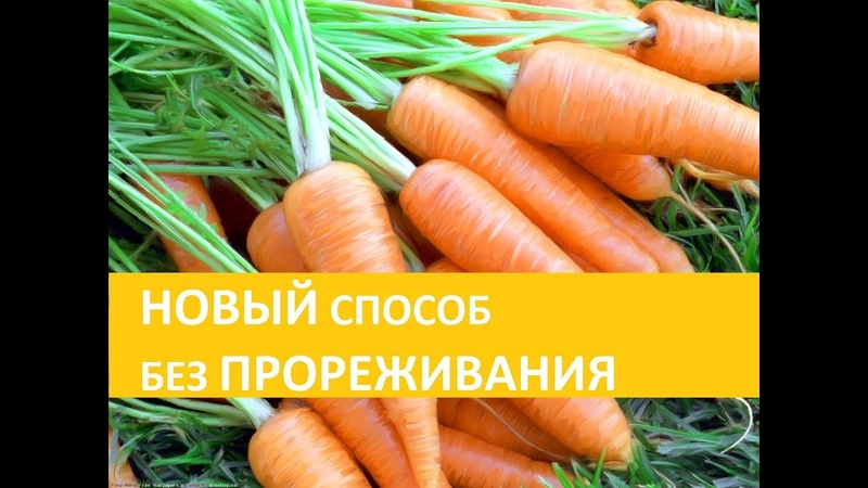Посев моркови ПО-НОВОМУ! Посадила и никаких мучений всё лето!