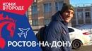 Кони в городе 2.0: Ростов-на-Дону