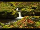 Mozart en otoño: Relájate, disfruta, vive.
