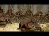 Rajun Cajun Redneck Gators all Gator scenes