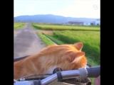 Котики любят прокатиться с ветерком