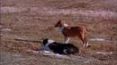 Richard Thorpe_1949_El Desafío de Lassie (Edmund Gwenn, Donald Crisp, Geraldine Brooks, Reginald Owen, Alan Webb, Ross Ford, Henry Stephenson)