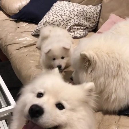Pawfect Pals on Instagram The day I realized smol puppers talk ALOT Demi likes to photo bomb and eating in peace is no longer an option 🤨