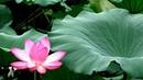 《迎春交响曲11首》上海乐团管弦乐队·中国名将交响乐团等演奏