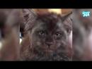 видео а/о - Кот похожий на человека