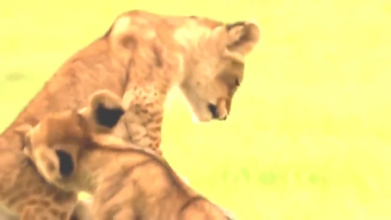 National Geographic Documentary - The Last Lions - National Geographic Wild