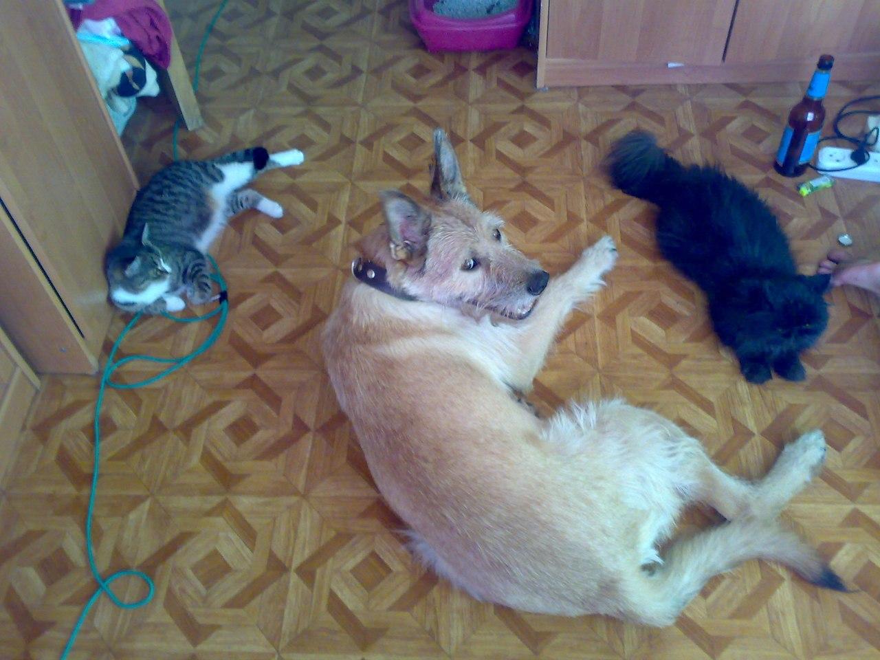 Нашел семью в России.Воспитанный и послушный Степан, хочет подарить Вам своё сердце. (id N550) CVoMZeOHTcc