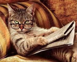 Возраст кошки по человеческим меркам или человеческий возраст вашей кошки