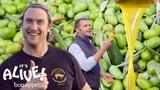 Brad Makes Olive Oil (In Italy!) It's Alive Bon App