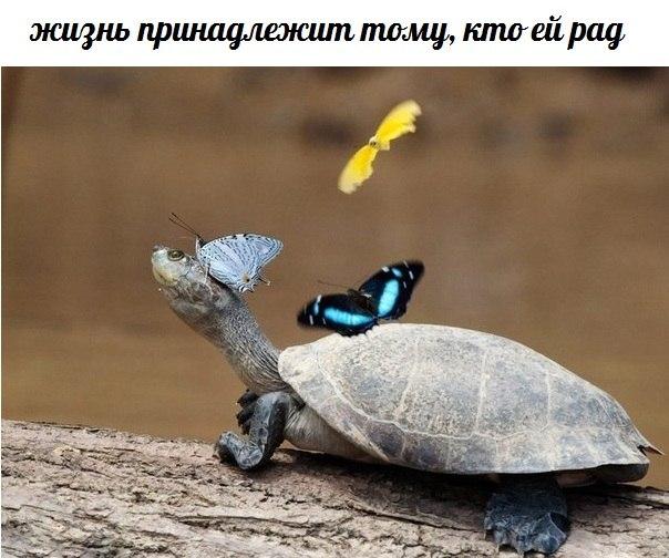 http://cs424420.vk.me/v424420788/97dd/0TkSzFX-ato.jpg