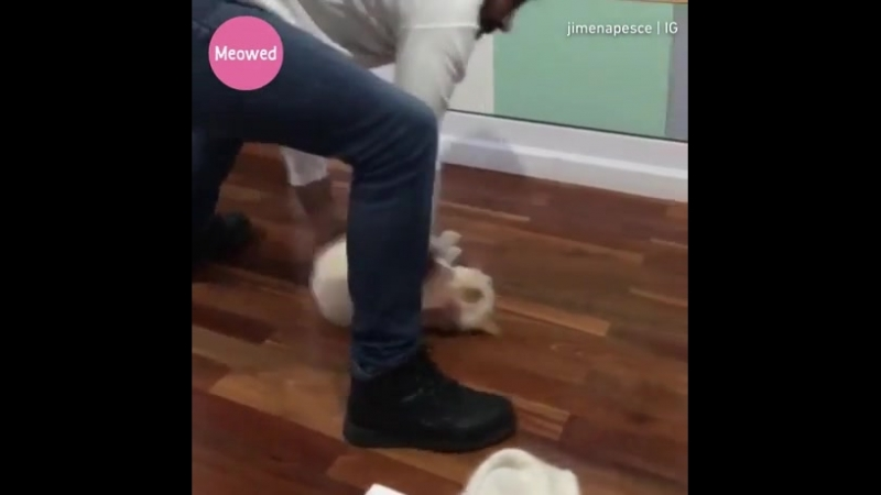 [Promoted] You don't need a broom when you have a cat. Follow @Meowed by 9GAG on Instagram