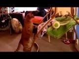 funny baby - прикольный ребенок, смешные видео про детей 7