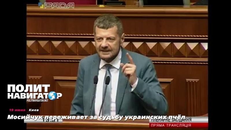 Мосийчук переживает за судьбу украинских пчёл