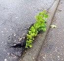 Растения, которые не сдаются