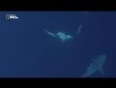Царство больших акул (2018) [P1] 2.2 ts
