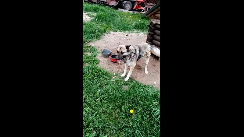 Марат, около 8-ми лет. Пёс с тяжёлой судьбой.
