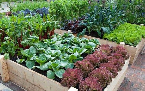 Все об устройстве сада