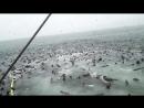 Hundreds of Seals Raid Fishermans Catch - Video KillSomeTim