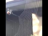 Паук и паутина