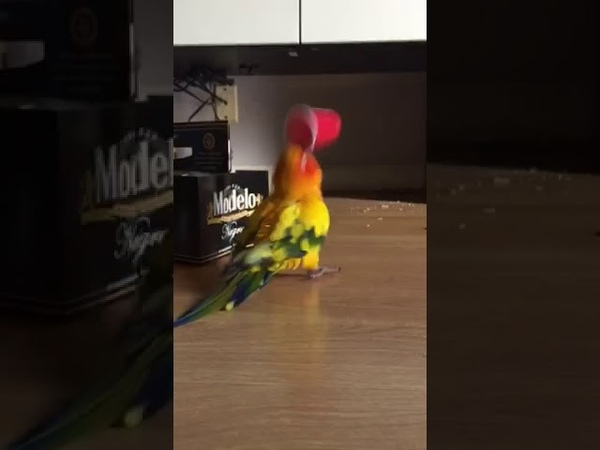 Parrot Vibrates Frantically While Holding Plastic Cup - 989688