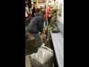 Питбуль напал на женщину в вагоне нью йоркского метро
