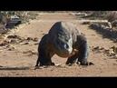 Nat Geo Wild Первая тройка самых опасных животных. Голодные игры 1080р