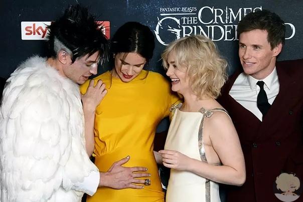 """Звезда """"Фантастических тварей"""" объявила о беременности на премьере фильма в Лондоне"""
