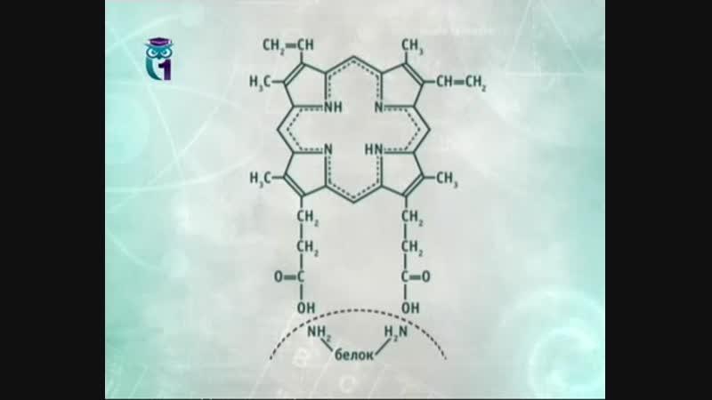 Химия для чайников. Лекция 30. Кислотная жизнь. Нуклеиновые кислоты