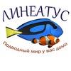 Линеатус - Морские аквариумы в СПб