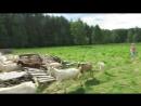 Козья ферма. Мимимишки.