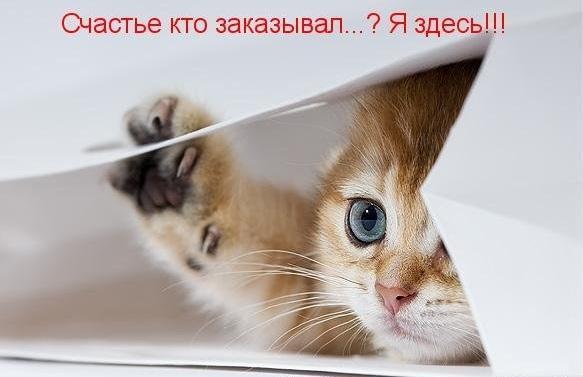 https://pp.vk.me/c635103/v635103906/9fb3/CGQldnLVKZ0.jpg