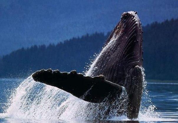 Одинокий кит