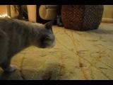 Кот в сметане. The cat in sour cream