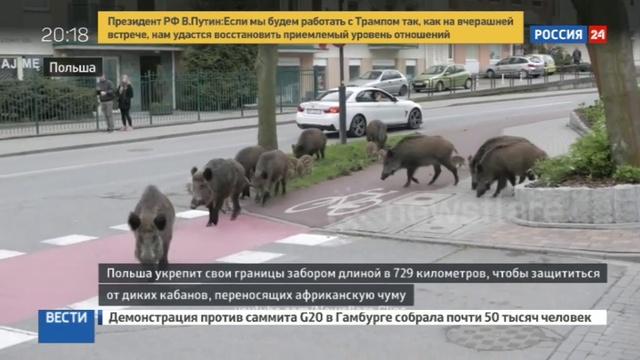 Новости на Россия 24 • Польша строит забор на границе с Украиной и Белоруссией