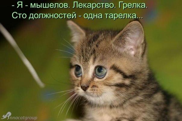 http://cs14115.vk.me/c7008/v7008313/27ae/y33MPwkObN0.jpg
