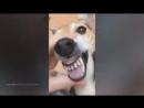 Кавер на Rammstein Du Hast в исполнении животных