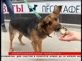 Найденной у новогодней ёлки собаке ищут хозяев в Новосибирске
