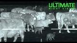 Охота на ВолковКойотов с Тепловизором Thermal Predator Hunting 45 Coyotes Down with the IR Hunter