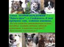Собаки Второй передержки Верного друга ищут семью и дом