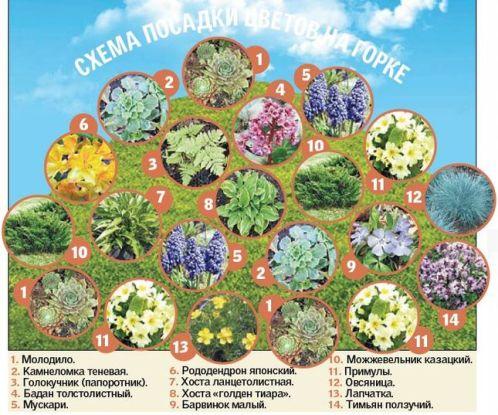 Схема посадки цветов в