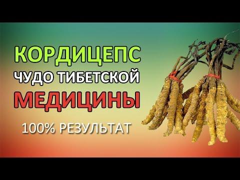 Кордицепс - отзывы, цена, где купить
