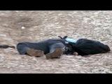 Найти и уничтожить - организатор теракта в Волгограде ликвидирован в пригороде Махачкалы - Первый канал