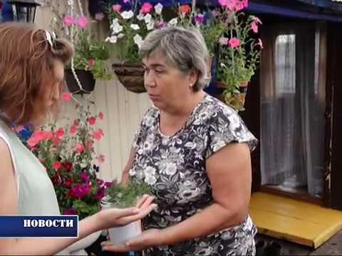 Эльза Уразметова, Новосафарово