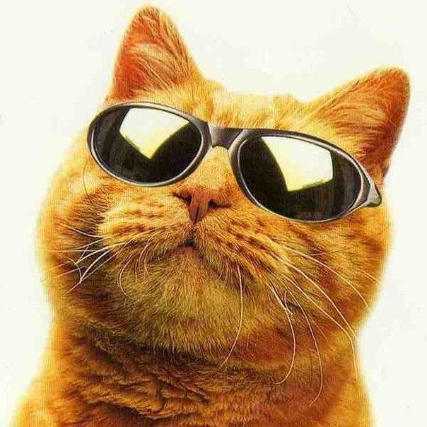 фото на аву котов