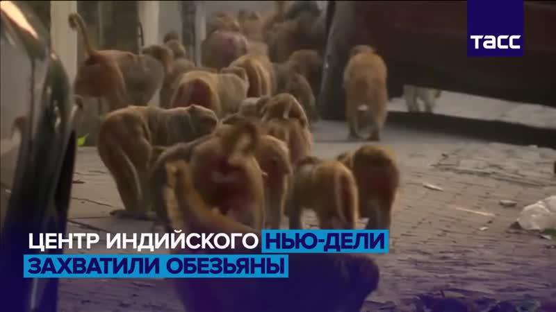 Макаки в большом городе vk.comtaksi88173325111 vk.comnsk_polinezziya