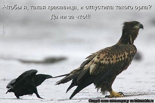 http://cs403723.userapi.com/v403723796/4184/_J8XKwbs2Jw.jpg