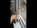 Кот сломался Оригинал _⁄ Focused cat is focused