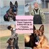 Оazis Dogs площадка для дрессировки собак