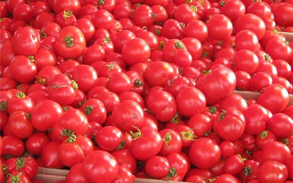 Испанский праздник Ла Томатина (La Tomatina)