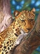 400. Узнать подробнее о Леопард на дереве.  Ravensburger 14107.